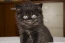 Kociaczki / Kittens